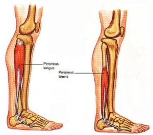 Weak Inner Thighs And The Peroneal Muscles