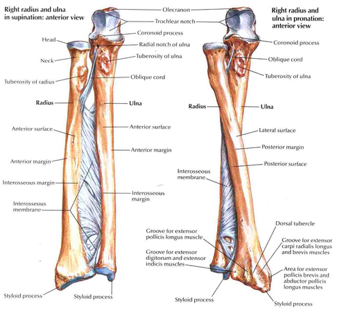 Forearm Fractures In Adults Bone And Spine