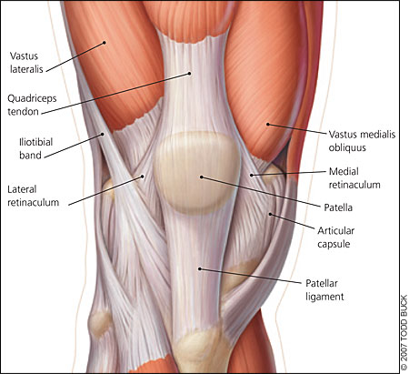 anatomy of knee ligaments knee anatomy ligaments muscles tendons