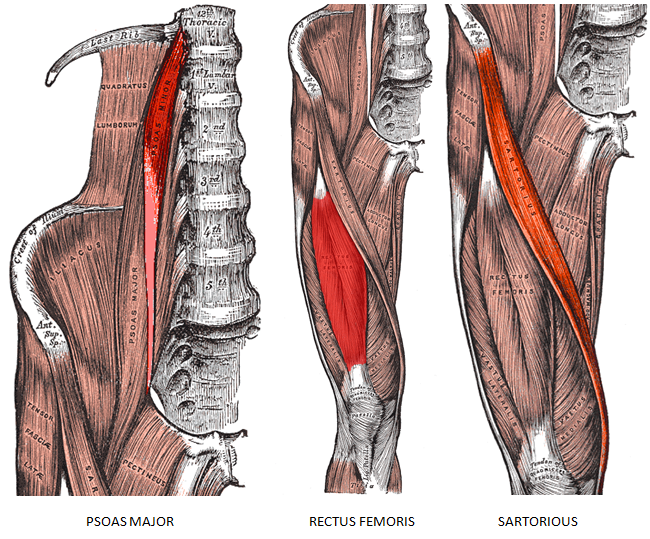 Image Gallery hip flexor pain