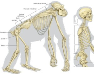 At CoreWalking we feel a lot of lower back pain is due to poor posture