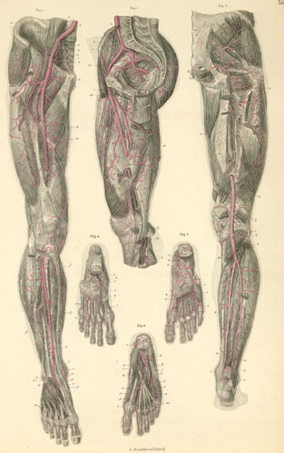 Inner Foot and Inner Thigh (and Psoas Major)