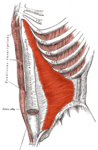 Trasnverse abdominis function supports the lower spine and helps with back pain.