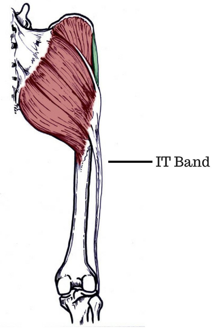 What is the Iliotibial Band?