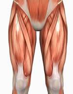 Your Poor Quadriceps Muscles
