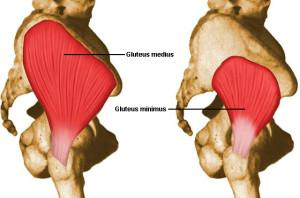 gluteus medius and minimus