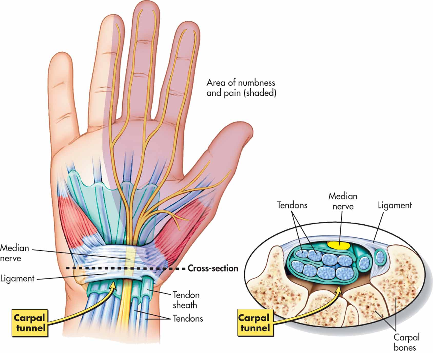 The Wrist And Carpal Tunnel Corewalking