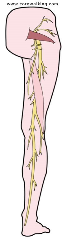 how to stop nerve pain in legs and feet