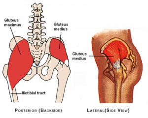 dysfunctional muscles gluteus medius and minimus