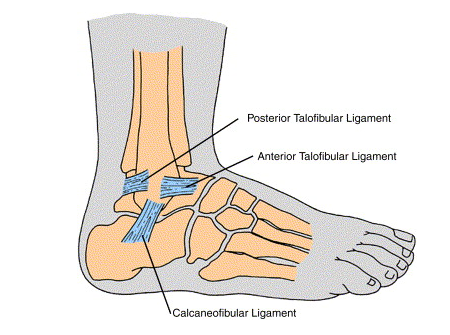 Lateral-Ankle-Ligaments - CoreWalking